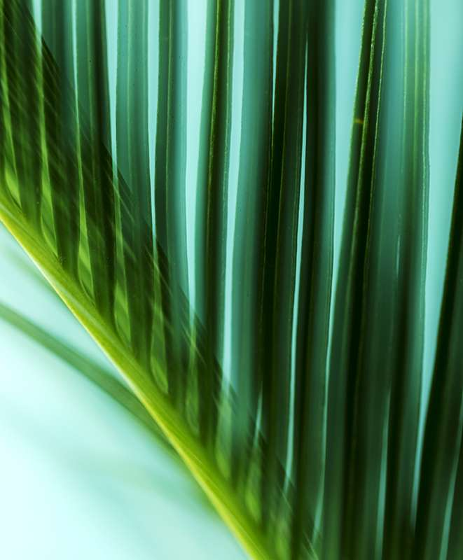 Photographing-Flora-online class-Green-color