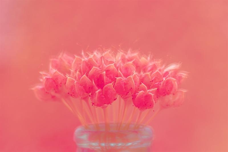 monochromatic flower picture flora online course
